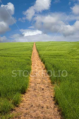 Footpath stretching out across a field to the horizon