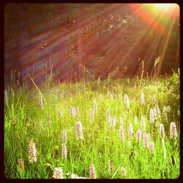 Sunbeams and Wild Flowers